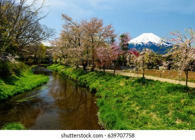 Mt. Fuji view from Oshino Hakkai with cherry blossom or Sakura in Yamanashi, Japan