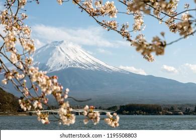 Mt Fuji.Foreground is a cherry blossoms.The shooting location is Lake Kawaguchiko, Yamanashi prefecture Japan.