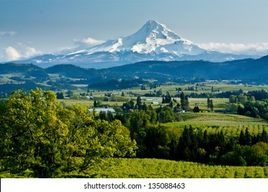 Mt. Hood Towering Over the Vineyards of the Columbia River Valley