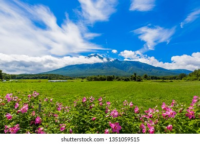 """It is Mt. Iwate, a famous mountain in Iwate Prefecture, Japan. The name of the pink flower on the front is """"Fuyo Aoi"""". - Shutterstock ID 1351059515"""
