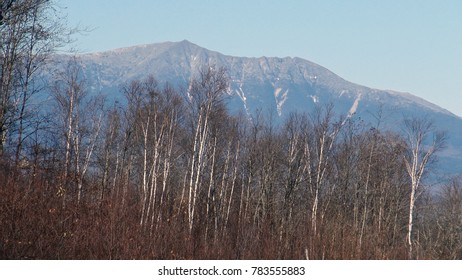 Mt Katahdin with birch trees in the Fall