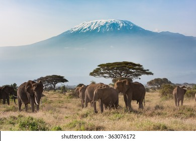 Mt. Kilimanjaro from Amboseli National Park