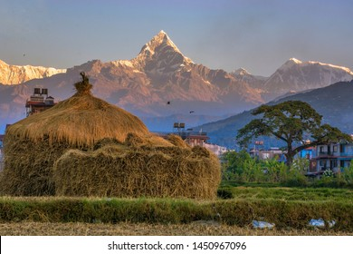 Mt. Machhapuchre is virgin mountain of Nepal, Located at Northern end of Pokhara Valley. November is best season to Witness these mountains.