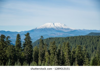 Mt St Helens from the Gifford Pinchot National Forest, Washington