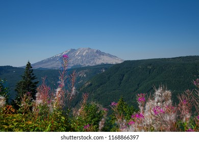 Mt. St. Helens NE Corner with Fireweed