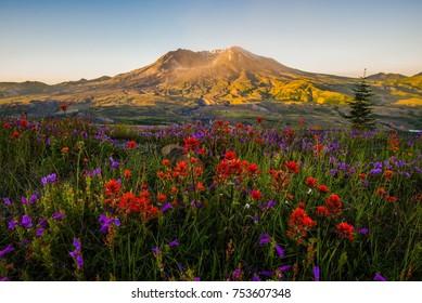 Mt St Helens at sunrise