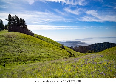 Mt Tam on a Spring Day Overlooking San Francisco