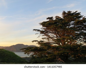 Mt Tamalpais in the distance, tree in the foreground as the sun sets in the San Francisco bay area.