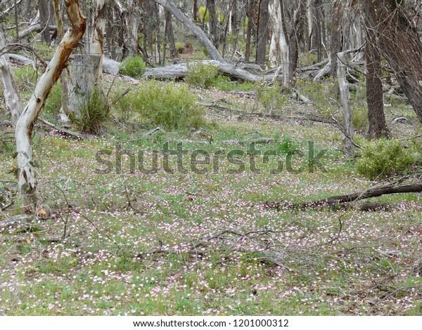 Mt Trio Bushcamp Stirling Range National Park