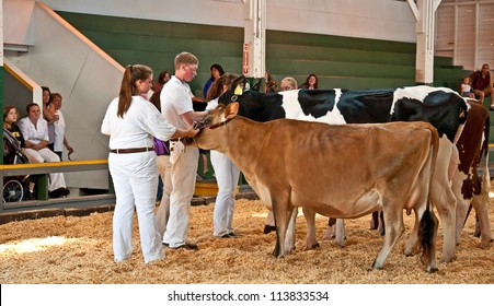 MT VERNON, WA - AUGUST 13: Unidentified teens in FFA are having their cows judged at the Skagit County Fair. The event was held August 13, 2009 in Mt Vernon, WA.