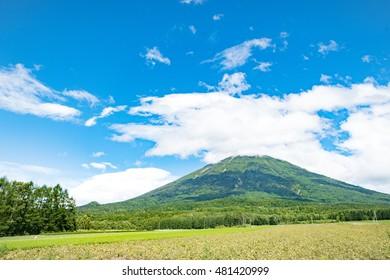 Mt Yotei and Tree of cherry Niseko Hokkaido ,Jaoan