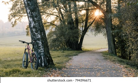MTB trail track, Mountain bike in autumn on bike path, Sport fitness motivation and inspiration background