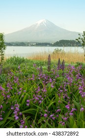 Mt.Fuji background  flower garden and lake