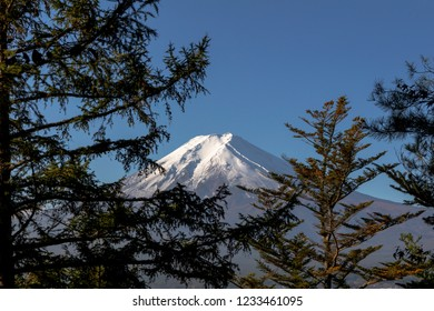 Mt.Fuji with blue sky and pine tree background