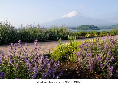 Mt.Fuji with flower garden at front