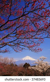 Mt.Fuji and Japanese apricot flower