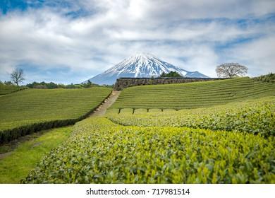 Mt.Fuji and Tea farm in spring at Shizuoka prefecture with sunrise and cloudy sky,Mount Fuji Japan