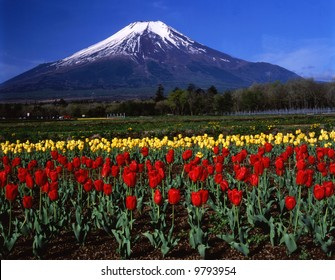 Mt,Fuji view from Yamanaka flower park