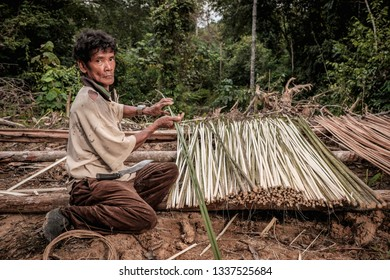 Muadzam Shah, Malaysia - March 12th, 2019 : Men of the Orang Asli split Kayu  Bertam using a knife. Bertam is a kind of palm tree found in Malaysian and Thai . His botanical name Eugeissona tristis.