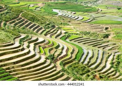 MUCANGCHAI , VIETNAM - MAY 18, 2016 : Rice fields on terraced of Mu Cang Chai , Vietnam. Rice fields prepare the harvest at Northwest Vietnam.Vietnam landscapes.