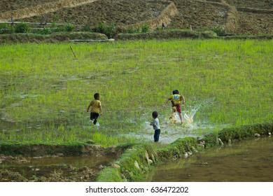 MUCANGCHAI, VIETNAM, May 7: H'mong ethnic minority children on May 7, 2017 in Mucangchai, Vietnam. H'mong is the 8th largest ethnic group in Vietnam.