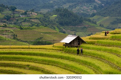 Mucangchai, Yenbai, Vietnam - SEPTEMBER 13, 2015: Farmers on terraced rice field in Mucangchai, Yen bai, Vietnam. Yenbai is a province in North of Vietnam with many terraced rice fields.