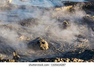 Mud pots / mud volcanoes at the Salton Sea in Southern California.   A mudpot — or mud pool — is a sort of acidic hot spring, or fumarole, with limited water. It usually takes the form of a pool of bu