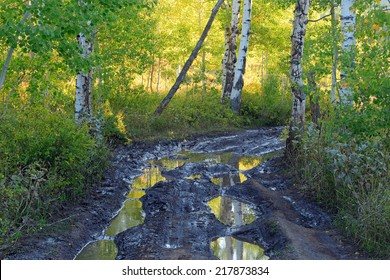 Mud puddle on a dirt road through an aspen forest, Utah, USA.
