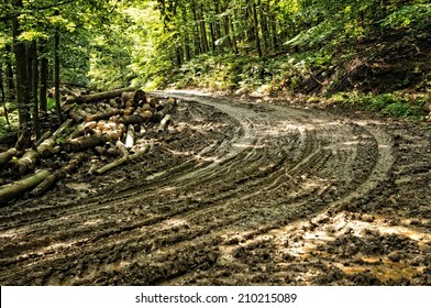 Mud road through the forrest