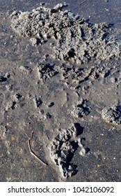 Mud, snow slush