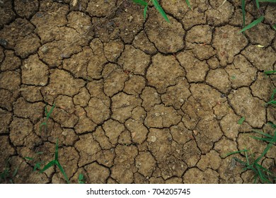 Mudcrack of Dried Soil