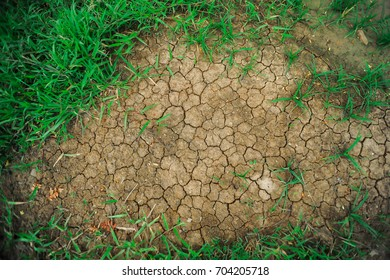 Mudcrack of Dried Soil with Green Grasses