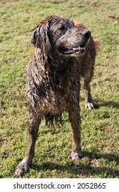 Muddy dog at the park
