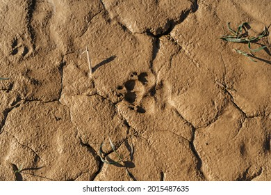 Muddy dog paw print with copy space. Animal footprints background. Rainy Dirty wet Weather Abstract scenery. Traces of animals outdoors flat lay, top view.