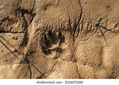 Muddy dog single paw print with copy space. Animal footprints background. Rainy Dirty wet Weather Abstract scenery. Traces of animals outdoors flat lay, top view.