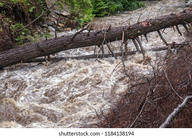 Muddy flash flood water rushing in stream with fallen tree and debris from storm damage.