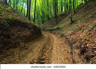 Muddy forest road in autumn in ravine. Colourful leaves on the ground.