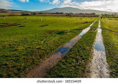 Muddy path crossing green sheep pastures in a Scottish farm