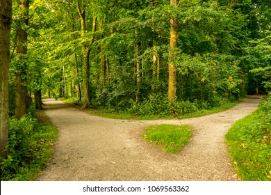 Muddy path parting into two at Haagse Bos, forest in The Hague, Netherlands, Europe