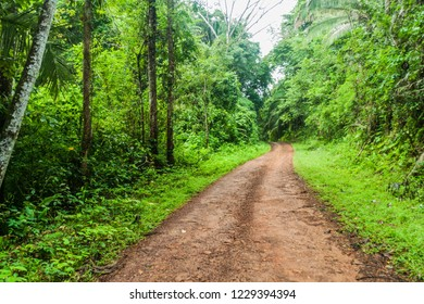 Muddy road in a jungle leading to Cockscomb Basin Wildlife Sanctuary, Belize