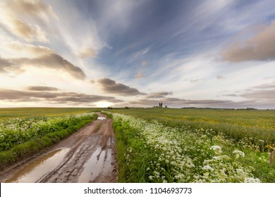 Muddy road leading into the distant rural landscape with plants and flowers and an old ruin in the distance