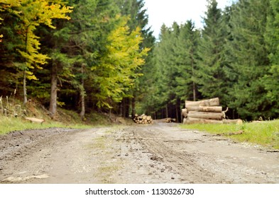 Muddy road in the woods and logs