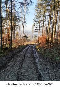 Schlammweg durch den Wald