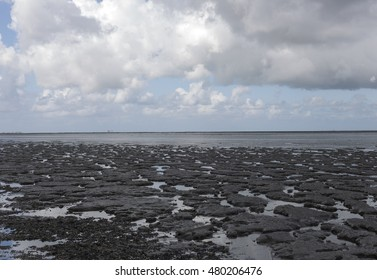 Mudflats Friesland The Netherlands