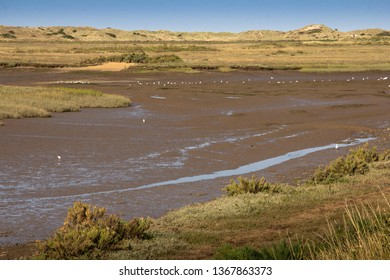 Mudlflats with seagulls at low tide on the Burn Estuary with distant sea and space for text. Landscape orientation.