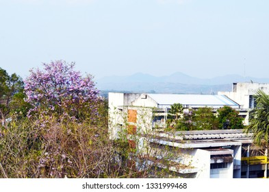 Mueang Loei, Loei Province / Thailand - March 6, 2019 : Purple flowers of Giant Crepe-Myrtle fully blooming and embracing buildings in Loei Rajabhat University under cloudy blue sky