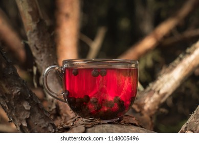 A mug of fragrant tea with blueberries stands in the forest on a old fallen tree. Red and green colors