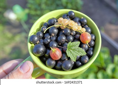 Mug with white berries and Cassis, crygenic and green leaves on top. Sunny summer day, close up - Shutterstock ID 1692431371