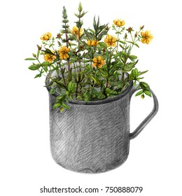 Mug with wild mint leaves and yellow hypericum flowers. Wild growth in hand drawn vintage metal cup