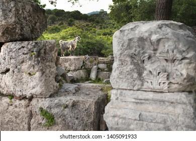 Mugla, Dalyan May 2019 Ancient city of Kaunos. The citadel is full of ancient ruins. - Görsel